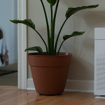 How-to-choose-an-air-purifier