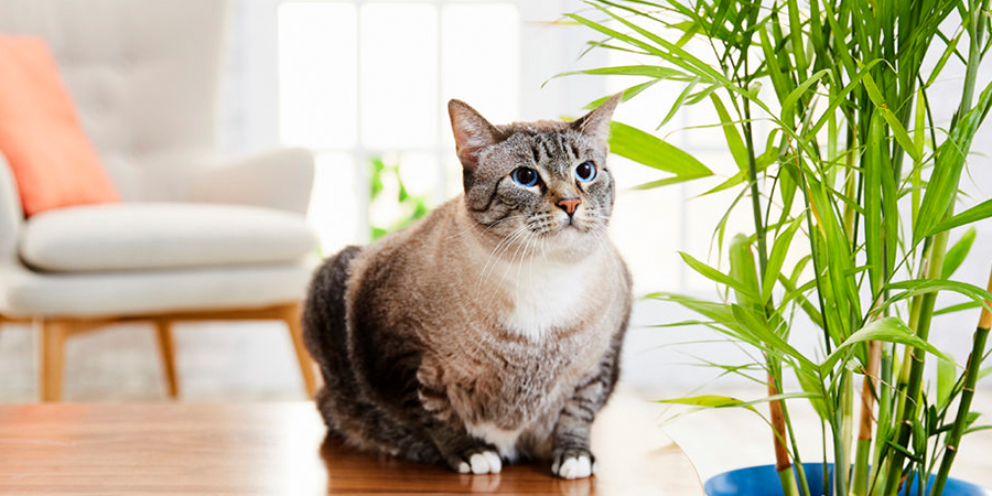 Are-air-purifiers-safe-for-pets